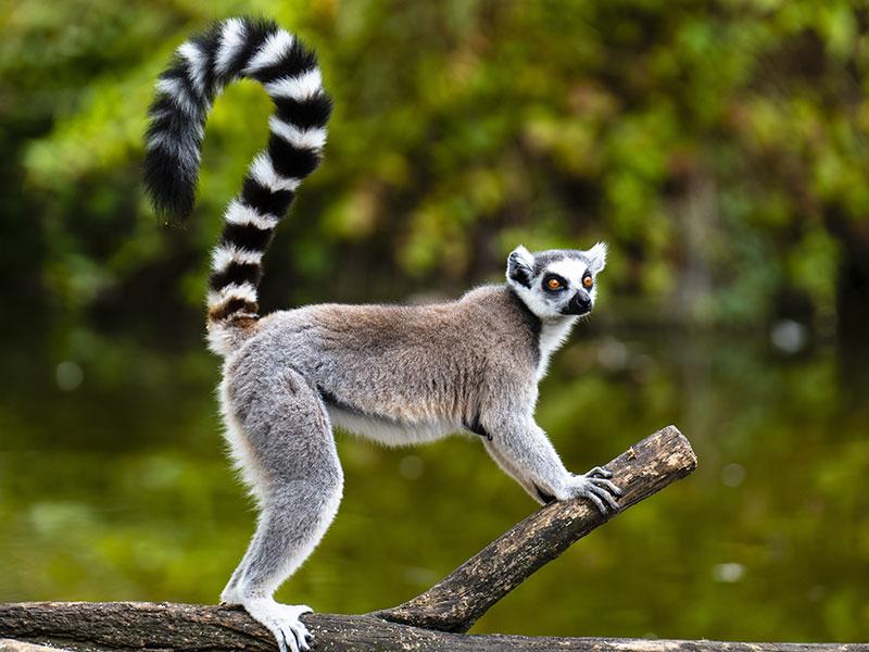Le parc national de la baie de Baly, un endroit à visiter absolument à Madagascar